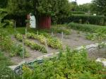 Our vegetable garden just after weeding, June 30, 2012