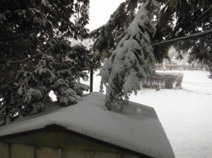 Snow storm, Feb. 8, 2013