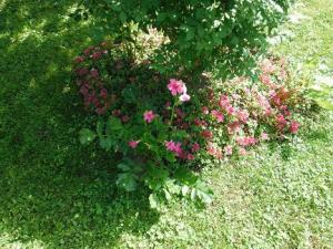 A new plant, Flowering Fern, set with pink sedum under a burning bush