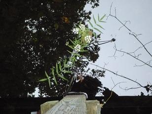 Rondeau Flower